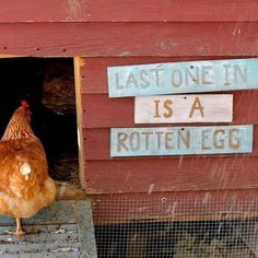 This would be a fun DIY sign for the door of the chicken coop!