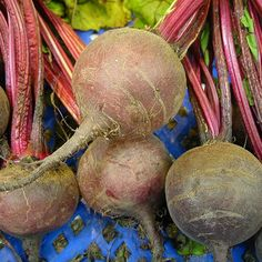 Early Blood Turnip-rooted Beet Seeds (<i>Beta vulgaris cv. Blood Pressure Supplements, High Blood Pressure Causes, What Is Blood Pressure, Blood Pressure Range, Increase Blood Pressure, Blood Pressure Remedies, Best Superfoods, Shops, Everything