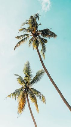 Palm Tree iPhone Wallpaper Collection by www. Palm Tree Iphone Wallpaper, Summer Wallpaper, Beach Wallpaper, Wallpaper For Your Phone, Iphone Background Wallpaper, New Wallpaper, Aesthetic Iphone Wallpaper, Nature Wallpaper, Aesthetic Wallpapers