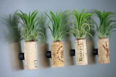 If you've really got no space at all, try air plant magnets.