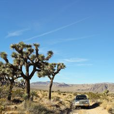 Geology Road - Off roading at Joshua Tree NP California USA (11 Amazing Things to Do in Joshua Tree National Park) // localadventurer.com