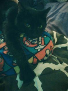 Goober getting comfy on my friends knee :-)