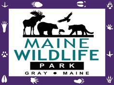 Maine Wildlife Park in Gray, Maine