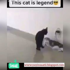 Funny Cute Cats, Funny Cats And Dogs, Cute Funny Animals, Funny Kids, Cats And Kittens, Cute Animal Videos, Funny Animal Pictures, Animal Jokes, My Animal
