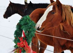 Ever wonder what Christmas looks like in Canada? Under the subdued light of a winter sky, Christmas in Canada is beautiful, challenging and jovial. It's also sometimes comical. Canada Christmas, What Is Christmas, Winter Sky, Horses, Blog, Life, Beautiful, Horse