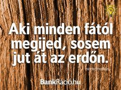 Aki minden fától megijed, sosem jut át az erdőn. - német mondás, www.bankracio.hu idézet