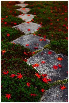 Fallen leaves on moss garden (Oobai-in 黄梅院) - Japan