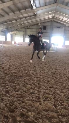 Hunter jumper Chica and I jumping a little course together! Hunter jumper Chica and I jumping a litt Horses Jumping Videos, Horse Videos, Equestrian Outfits, Equestrian Style, Equestrian Problems, English Riding, Hunter Jumper, Horseback Riding, Horse Riding