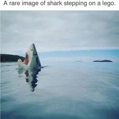 Rare image of a shark stepping on a LEGO. Rare Images, Rare Pictures, Funny Pictures, Funny Animal Photos, Funny Animals, Animal Funnies, Early Childhood Quotes, Step On A Lego, Lego Photo