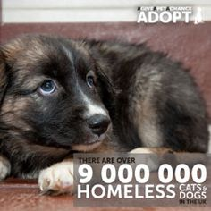 With 9 million homeless cats and dogs in the UK, The Mayhew Animal Home are encouraging people to consider adopting a pet instead of buying. Dog Charities, Scary Facts, Homeless Dogs, Animal House, Special People, Rescue Dogs, About Uk, Pet Adoption, Dog Cat