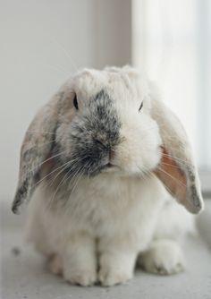 Bruce the bunny