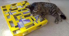 chat joue avec son circuit
