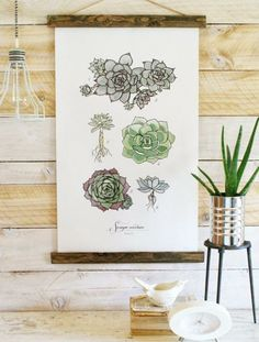 Meet our latest home decor <3 Sempervivum Study Vol.1