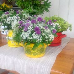 Finel and flowers. Finland, Garden Ideas, Planter Pots, Flowers, Plants, Instagram, Landscaping Ideas, Plant, Backyard Ideas