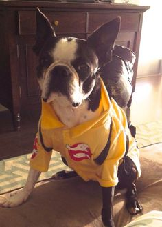 Ghost Busters - http://bostonterrierworld.com/ghost-busters/