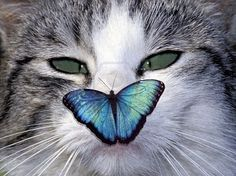 Squinting Cat With A Butterfly On Her Nose