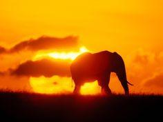 Puesta de Sol con elefante