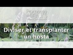 Promesse de Fleurs - YouTube Social Media Conference, Best Time To Post, Comment Planter, Plantation, Good Things, Blogging, Gardening, Culture, Gardens