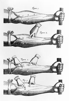 Awesomely Gross Medical Illustrations From the 19th Century | These engravings from English physician William Harvey's De Motu Cordis (1628) formed a central part of Harvey's demonstration that the blood circulates and that the heart is a pump.  D.A.P.  | WIRED.com