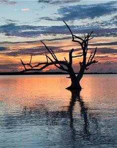 Harbour Island Lone Tree #Bahamas