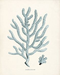 Antique Sea Coral Print No 2 - 8x10 in Sea Foam