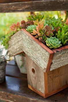 This birdhouse is handmade locally in Santa Cruz with recycled redwood. You can plant the top with low growing ground covers or succulents. The hole is to speci Container Plants, Container Gardening, Low Growing Ground Cover, Antique Bird Cages, Dig Gardens, Living Roofs, Natural Homes, Cactus Y Suculentas, Cacti And Succulents