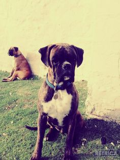 My own boxer brother!!*