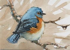 """A cute little bluebird. Looks like a tough guy. I used a lot of """"artistic license """" with little guy. inch, Micron pen and Winsor Newton Watercolor on Strathmore paper. All though this is a small painting, it was done with a half inch flat brush. Winsor And Newton Watercolor, Pen And Watercolor, Watercolor Artists, Watercolor Animals, Watercolor Paintings, Watercolours, Acrylic Paintings, Bird Drawings, Ink Pen Drawings"""