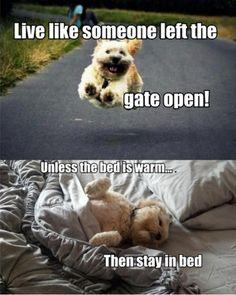 Doggie advice-Better than Dear Abby!