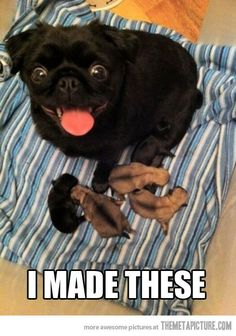 Proud Pug Mama