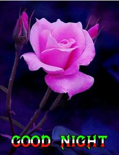 Good Night All, Good Night Flowers, Good Night Friends, Morning Quotes, Rose, Plants, Painting, Pink, Painting Art