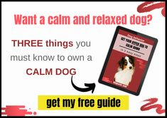 Puppy Vaccinations Schedule, a Complete Guide - dogpackr How Do You Stop, What Can I Do, Dog Training Courses, Agility Training, Hyper Dog, Brain Games For Dogs, Relaxed Dog, Excited Dog