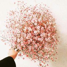 Wedding Flower Gypsophila seeds Gypsophila paniculata L. Simple Flowers, Dried Flowers, Beautiful Flowers, Fresh Flowers, White Flowers, Baby's Breath Wedding Flowers, Wedding Bouquets, Flower Aesthetic, Floral Arrangements