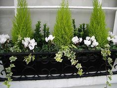 Winter window box - could do this with my little conifer that needs repotting an. - Winter window box – could do this with my little conifer that needs repotting anyway - Winter Planter, Fall Planters, Garden Planters, Terrace Garden, Black Planters, Fence Garden, Garden Shrubs, Outdoor Planters, Easy Garden