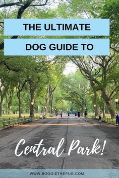 Central Park truly is a dog paradise for city dwelling canines. These are the best dog-friendly things to do and see in Central Park. Great Places To Travel, Places To Visit, Dog Travel, Travel Usa, Travel Hacks, Travel Ideas, Conservatory Garden, Central Park Nyc, Places In America