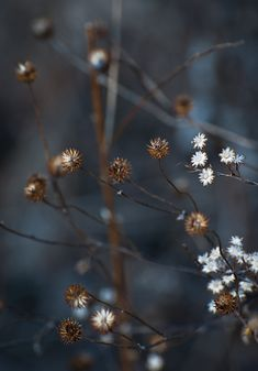 Bob Diekmeier - looks like a painting Seed Pods, Bokeh, Wild Flowers, Winter Flowers, Meadow Flowers, Beautiful Flowers, Nature Photography, Earth, Colours