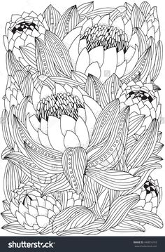 Protea Flower Zentangle Adults Coloring Page 440816743 : Shutterstock