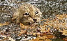 Conheça filhotes fofos do mundo animal