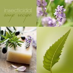BASIC INSECTICIDAL SOAP RECIPE WITH CITRONELLA AND LAVENDER