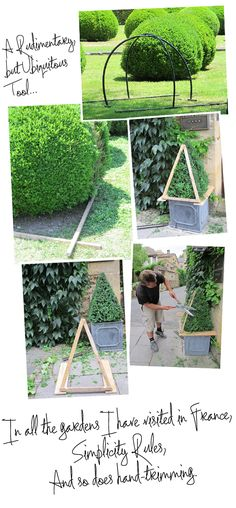 Topiary Magic Revealed | Charlotte Moss