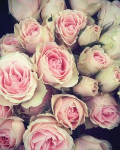 Roses captured by Tyler Casanova. Available on BucketFeet.com #BucketFeet #Rose