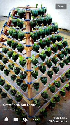 Water bottle garden