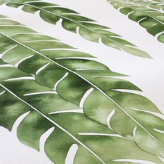 #wip sweeping Island ironwood leaves.  Thank you @abeautifulmess for the #abmplantlady feature today!