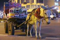 """""""Donkey-Courier"""" by Oleg Gritskevich #courier"""