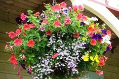 Container Garden Design: Petunia, Impatiens, Phlox, Lobelia