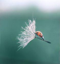 It sure beats flying #photographytalk #ladybug