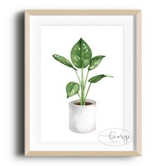 Lola & George - Peace Lily Print Printed on quality silk card. Available in or size. Unframed - any frames and/or additional items shown in product photos not included. Peace Lily, Plant Decor, Planter Pots, A3 Size, A4, Prints, Frames, Gardening, Silk