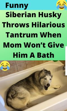 Daffy Duck Quotes, Fluffy Husky, Just Amazing, Awesome, Funny Humor, Movies And Tv Shows, Cute Animals, Hilarious, Entertainment