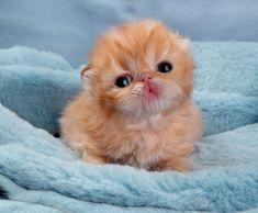 new born kittens - Buscar con Google