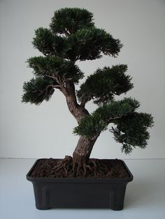 Bonsai Zeder 60 cm getopft künstliche Pflanze Dekobaum Baum Kunstbaum Dekoration